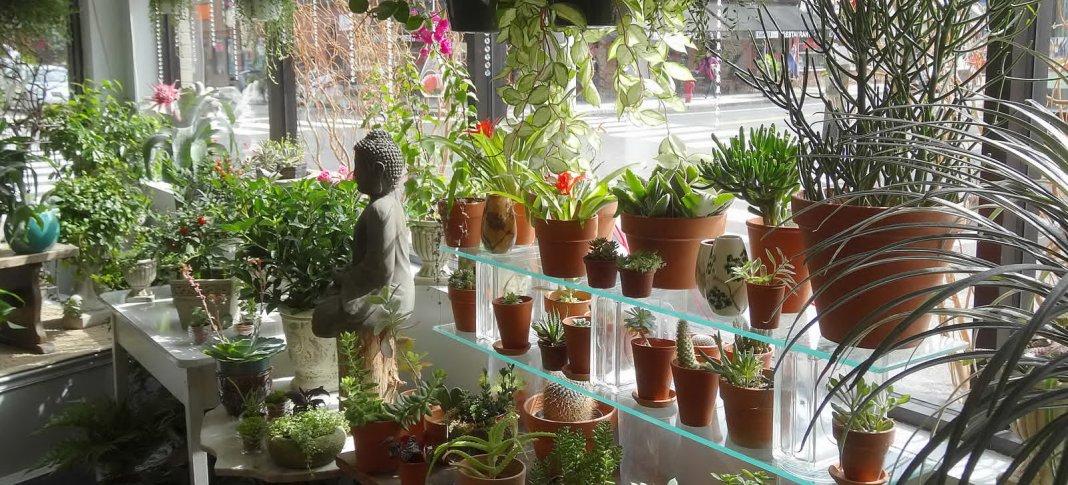 Какие горшечные растения должны быть в Вашем магазине