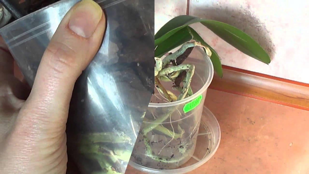 Покупка и транспортировка орхидей